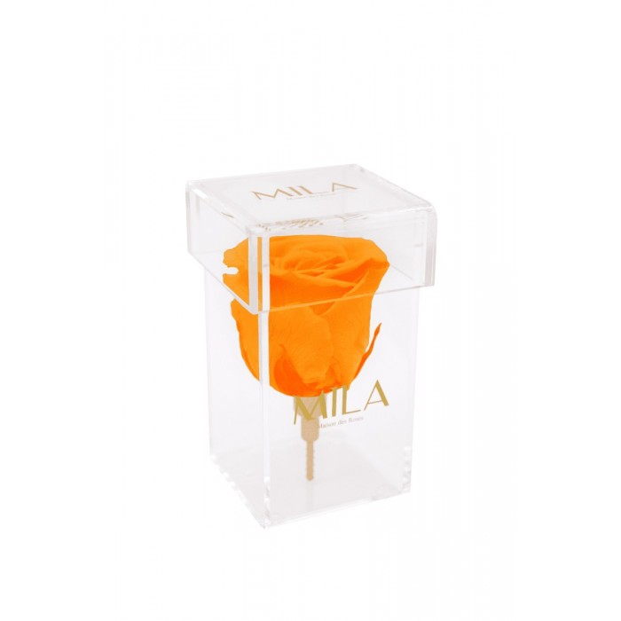 Mila Acrylic Single Stem